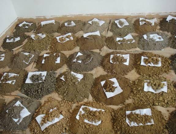 土壤自动抢红包神器免费如何正确采样