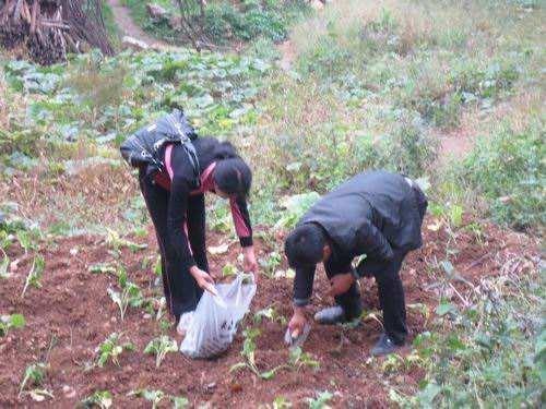 土壤采样步骤