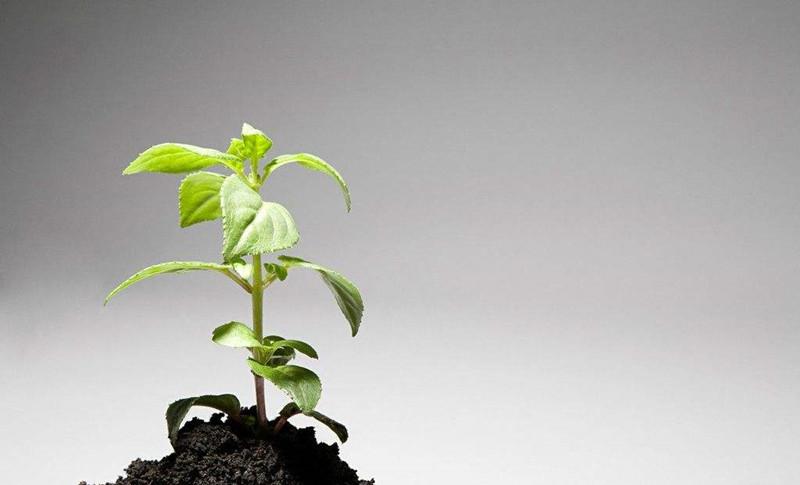 绿化种植土壤检测项目及检测指标
